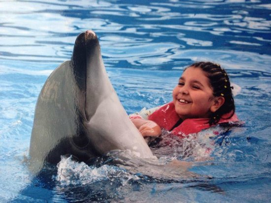 Sharm Safari Club: Dolphin Show