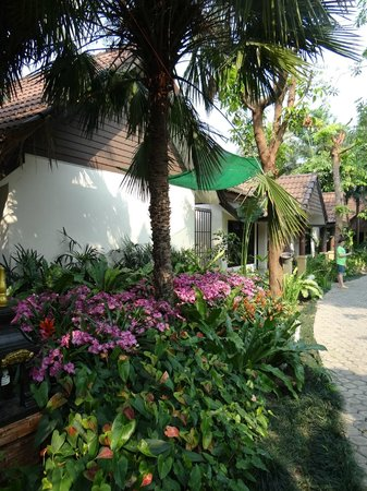 Laluna Hotel and Resort: allées fleuries