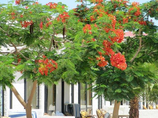 Beach Albatros Sharm : Растительность отеля