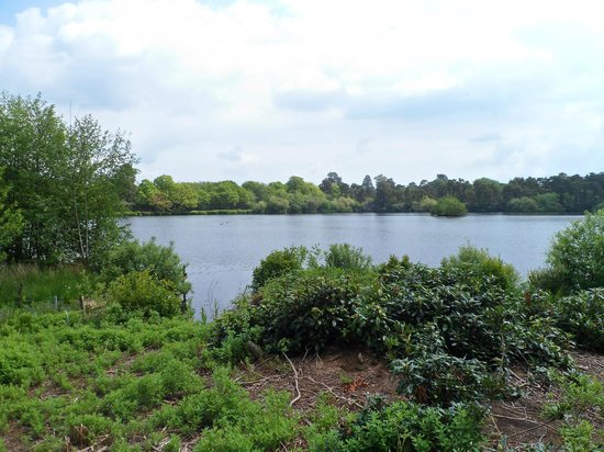 Champneys Forest Mere: View from the dining room