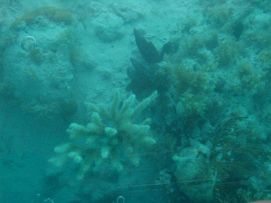Bermuda Reef Explorer: View of reefs through the glass bottom
