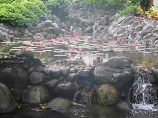 Grand Hyatt Bali: Pond at the hotel