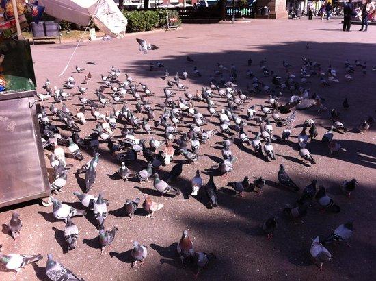 Plaza de Cataluña: pigeons