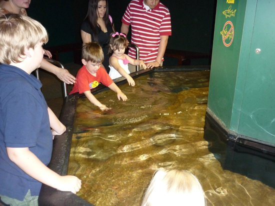 Tennessee Aquarium : touching the fish