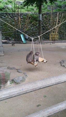 Takasakiyama Natural Zoo : 仲良くブランコで