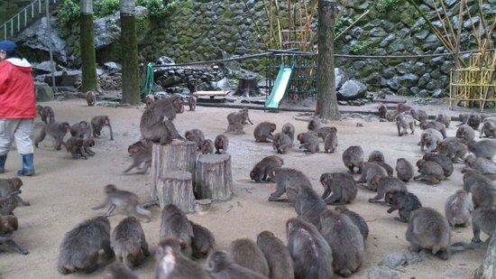 Takasakiyama Natural Zoo : 餌中