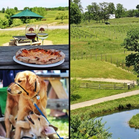 Barrel Oak Winery: Wine, Pizza, and Puppies!
