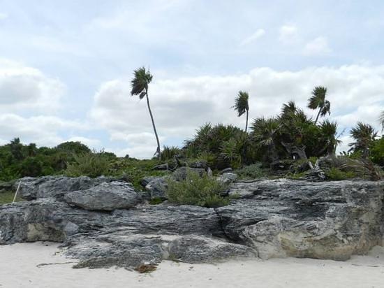 Hotel Riu Yucatan: The beautiful wild part of the beach