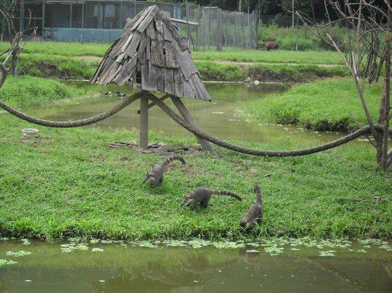 Portobello Resort & Safari: Quati