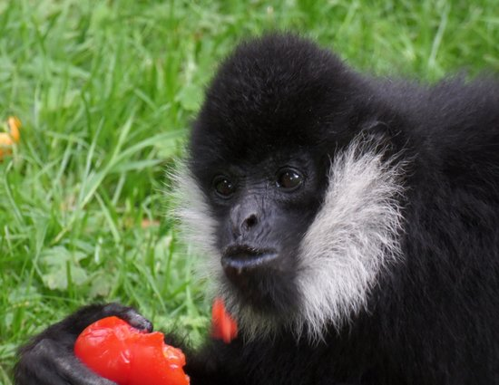 Parc Zoologique Cerza : macaque