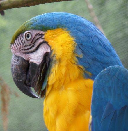 Parc Zoologique Cerza : perroquet