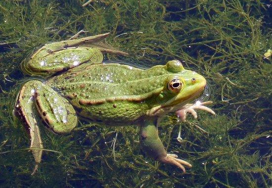 Parc Zoologique Cerza : grenouille