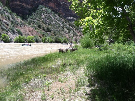 Dinosaur River Expeditions : Some guests getting a drink next to camp.