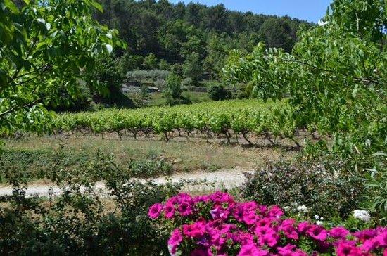 Azur Wine Tours : vines