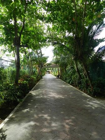 Hotel Riu Yucatan: Beautiful grounds