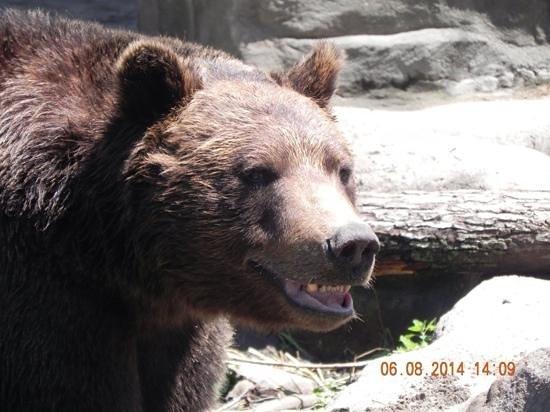Detroit Zoo: Smiling Bear