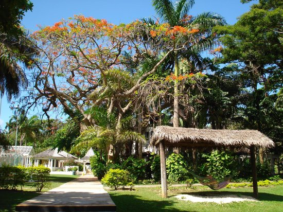 Jewel Dunn's River Beach Resort & Spa : view from rooms