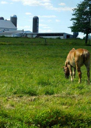 The Amish Farm and House : Farmland during bus tour.