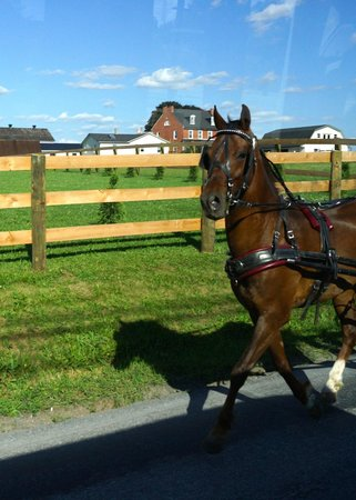 The Amish Farm and House : A horse pulling a buggy along a country road