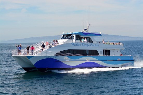 2SeeWhales Harbor Breeze Cruises