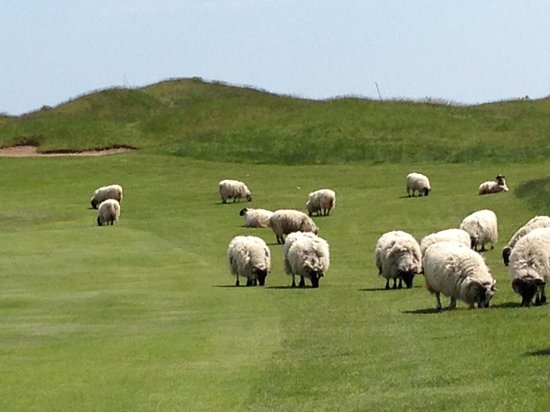 Whistling Straits Golf Course - Straits and Irish