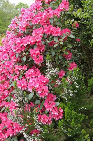 Leny Estate Self-Catering: Rhododendrons