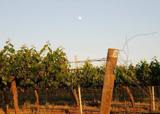 Full Moon over Hidden Oak Winery