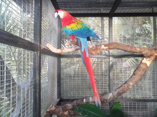 Barbados Wildlife Reserve: parrot house