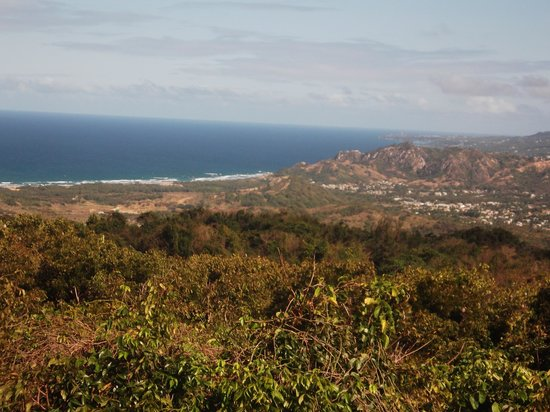 Barbados Wildlife Reserve: the veiw from the signal box