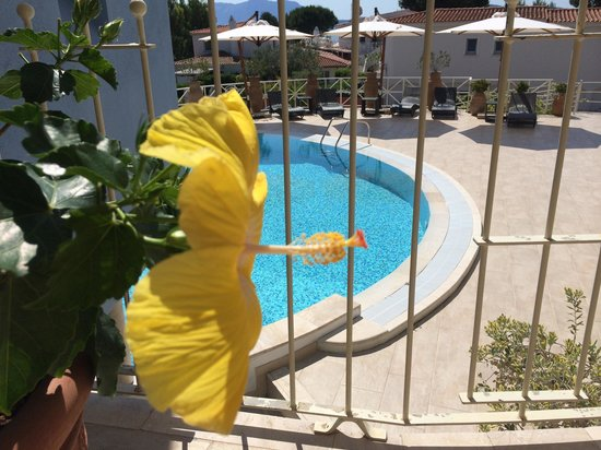 The Pelican Beach Resort & Spa - Adults Only : Piscine