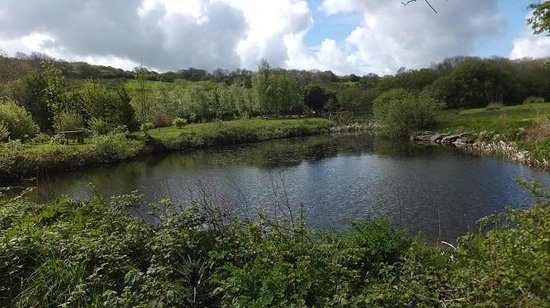 Dyffryn Fernant Gardens: The pond at Dyffryn Fernant, with picnic tables
