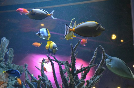 Mystic Aquarium : one of the fish tanks