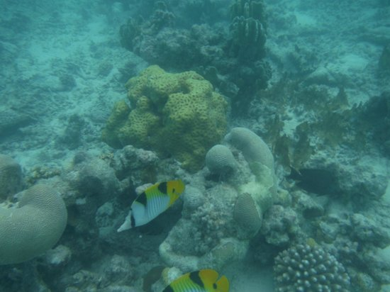 Baros Maldives : snorkeling near water villas