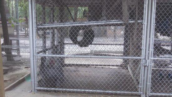 Waccatee Zoo : tiny monkey cage