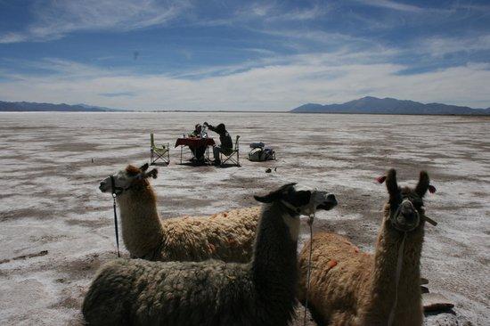 Caravana De Llamas Day Tours: Las llamas