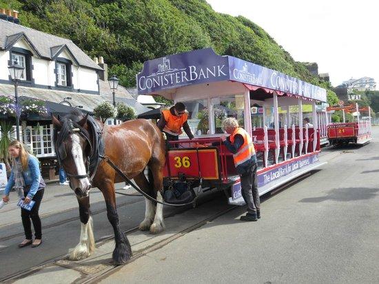 Douglas Bay Horse Tramway: 馬の列車