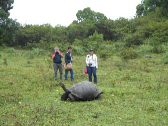 Charles Darwin Research Station: turtles