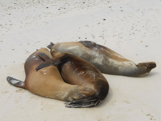 Charles Darwin Research Station: the sea lions in other island