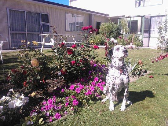 Mt Dobson Motel : Garden outside the units (pet friendly)