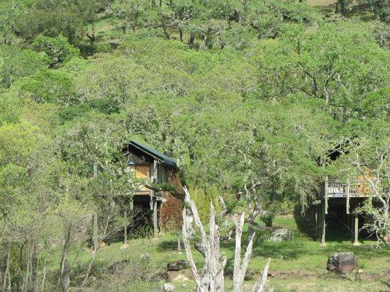 Safari West: Tent Cabins