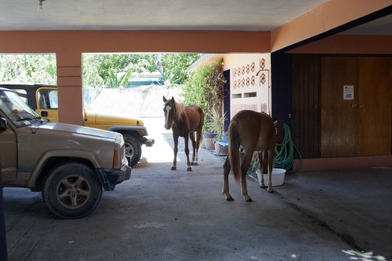Esperanza Inn: horses help themselves to the water in the foot bath