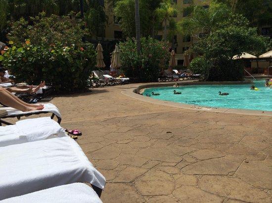 Loews Royal Pacific Resort at Universal Orlando: Baby ducks. Nice touch. Lol