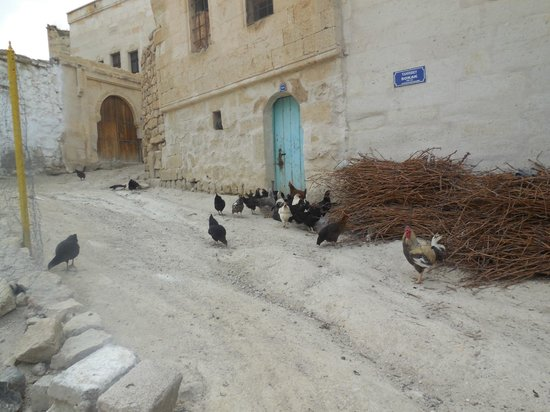 Dreams Cave Cappadocia: Village scene with chickens