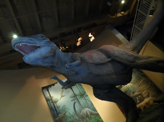 Fernbank Museum of Natural History: Dinosaur exhibits
