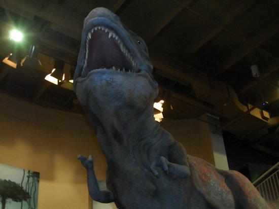 Fernbank Museum of Natural History: Dinosaur Exhibits