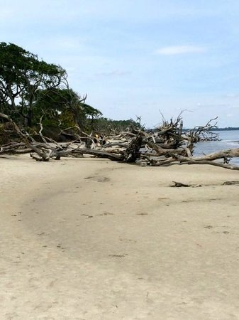 Jameson Inn: Driftwood Beach in Jekyll Island