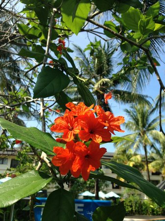 Khaolak Orchid Beach Resort: Great flowers in the gardens