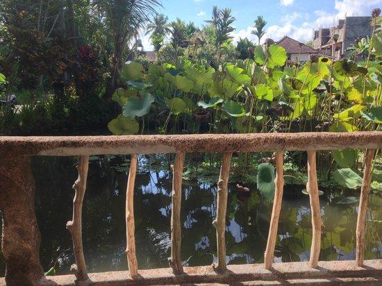 Sri Sunari Guest House : at front gate