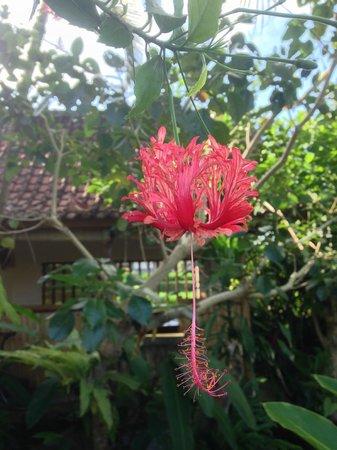 Sri Sunari Guest House : garden
