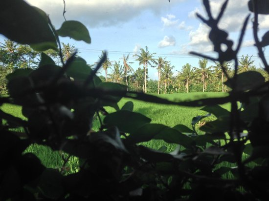 Sri Sunari Guest House : view from grounds